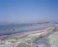 Sea (Algal Bloom)